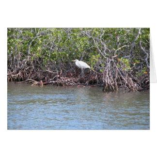 Cartão Egret nos manguezais