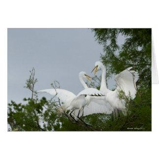 Cartão Egrets de duelo