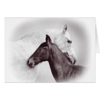 Cartão Égua andaluza espanhola branca com potro preto