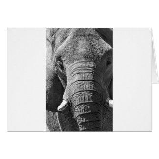 Cartão Elefante asiático em preto e branco