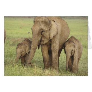 Cartão Elefante indiano/asiático e jovens uns, Corbett