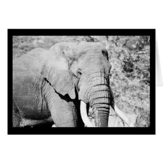 Cartão Elefante no Serengeti