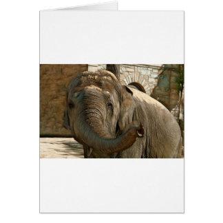 Cartão Elefante que aponta para a frente com o tronco