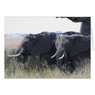 Cartão Elefantes