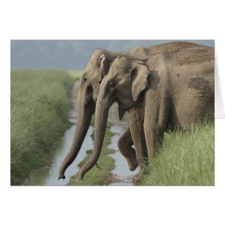 Cartão Elefantes indianos que cruzam a trilha, Corbett