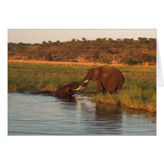 Cartão Elefantes no por do sol, Chobe