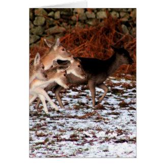 Cartão Em suas marcas (cervos)