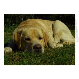 Cartão Enfado - Labrador na grama verde