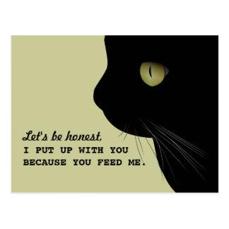 Cartão engraçado da atitude honesta dos gatos