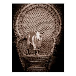 Cartão engraçado da cabra