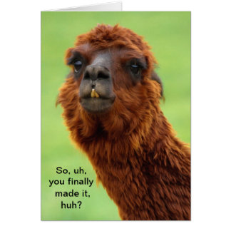Cartão engraçado da graduação do lama