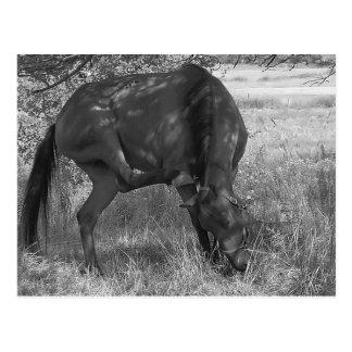 Cartão engraçado do cavalo