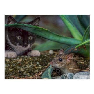 Cartão engraçado do gato e do rato