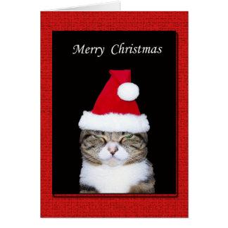 Cartão engraçado do Natal, gato com chapéu do