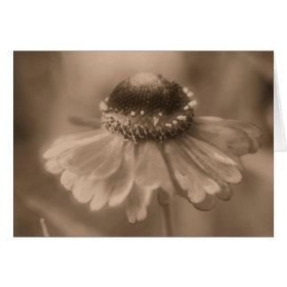 Cartão envelhecido da fotografia da flor da