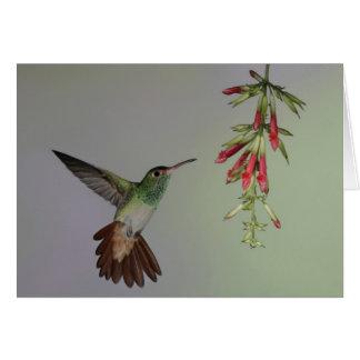 Cartão Equador, alojamento do pássaro de Tandayapa.