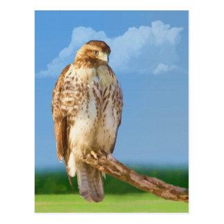 Cartão equipado com pernas áspero do falcão
