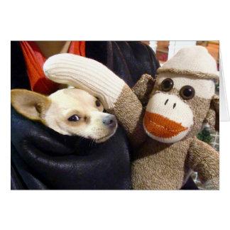 Cartão Ernie o macaco e a chihuahua da peúga carda