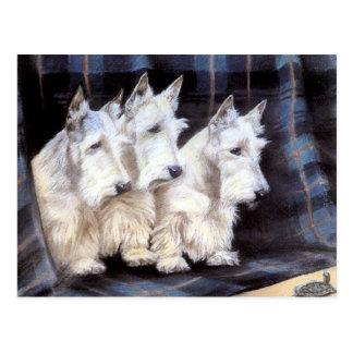 Cartão escocês branco dos Scotties dos terrier do