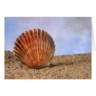 Cartão Escudo dos moluscos