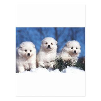 Cartão Eskimo americano do filhote de cachorro