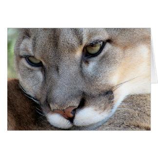 Cartão Espécie em vias de extinção: Pantera de Florida