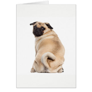 Cartão Espreitar do Pug