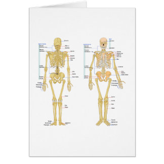 Cartão Esqueleto humano etiquetado carta da anatomia