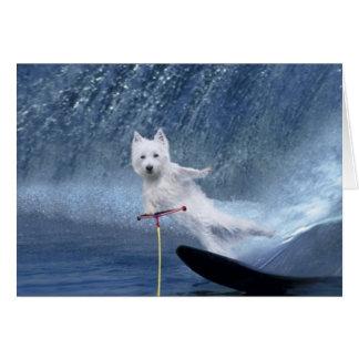 Cartão Esqui aquático Westie!