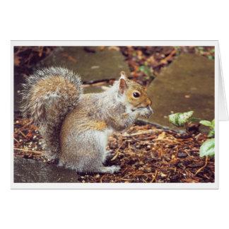 Cartão Esquilo