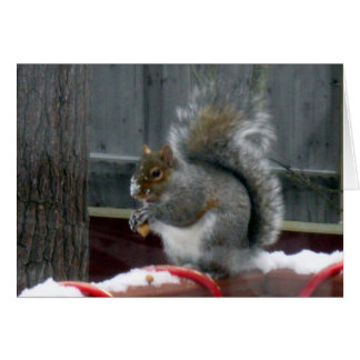 Cartão Esquilo cinzento no inverno