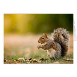 Cartão Esquilo com fome