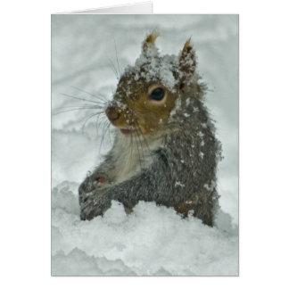 Cartão Esquilo da neve