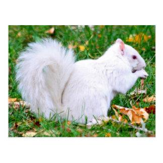 Cartão - esquilo do albino