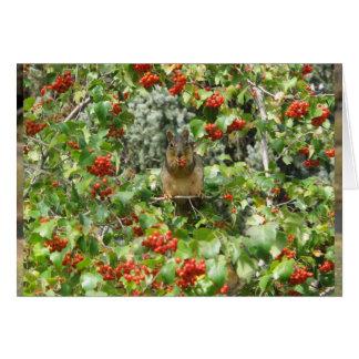 Cartão Esquilo em Rowan
