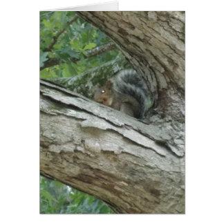 Cartão Esquilo em uma árvore