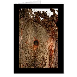 Cartão Esquilo na árvore