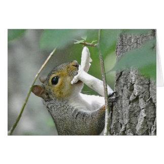 Cartão Esquilo Notecard