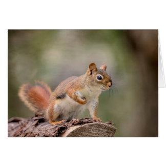 Cartão Esquilo vermelho
