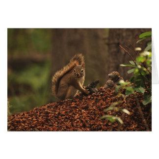 Cartão Esquilo vermelho na pilha dos restos