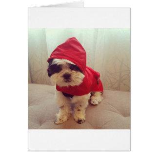 Cartão Este cão deia a chuva