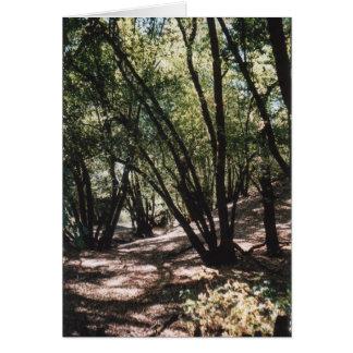 Cartão Estrada seca da angra