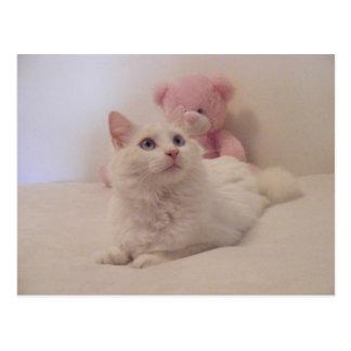 Cartão estragado sonhador do gatinho