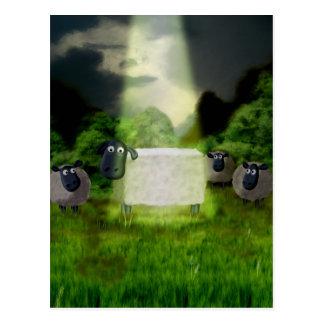 Cartão estrangeiro da experiência dos carneiros