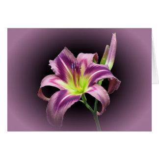 Cartão Estrela do lírio com roxo - hemerocallis