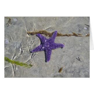 Cartão Estrela do mar