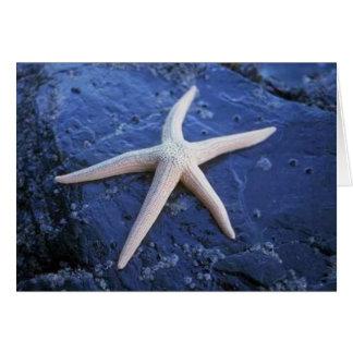 Cartão Estrela do mar na rocha da lava