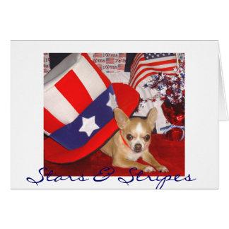 Cartão Estrelas & chihuahua das listras