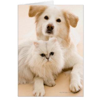 Cartão Estúdio disparado do gato e do cão