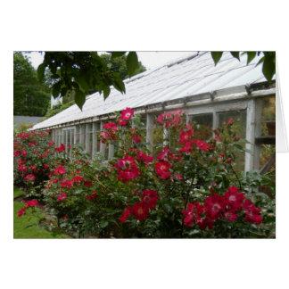 Cartão Estufa das rosas vermelhas